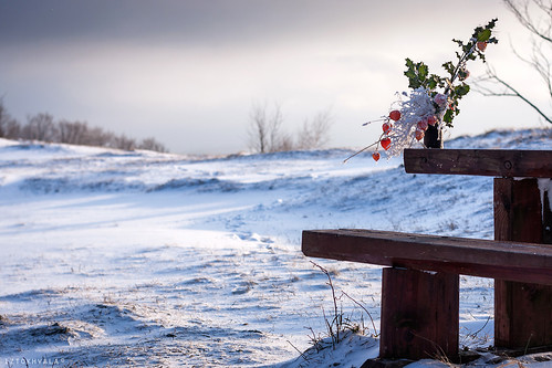 mist snow cold fog bench table photography photo dof view image steps picture snowing capture verycold canonphotography frozenflowers stepsinsnow canon40d iztokhvala canondslriztokhvala