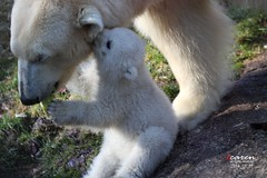 Frühstück bei den Eisbärenzwillingen 2014_03_27