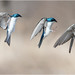 Landing Sequence by Chris Lue Shing