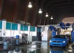 Mustang at A1A