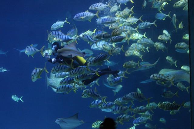 Photo:大洋池餵食解說 Open Ocean Tank Fish Feeding Show By Chi-Hung Lin