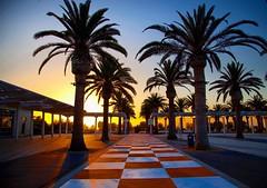 Sunset walks. #summer #greatpark #irvine #socal #sunset #cali #OC #orangecounty #palmtrees #instagood #iphonesia #photooftheday