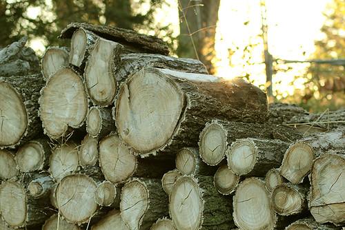 Logs waiting to be chopped