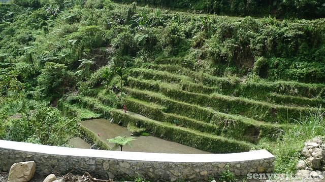Batad-Ifugao30
