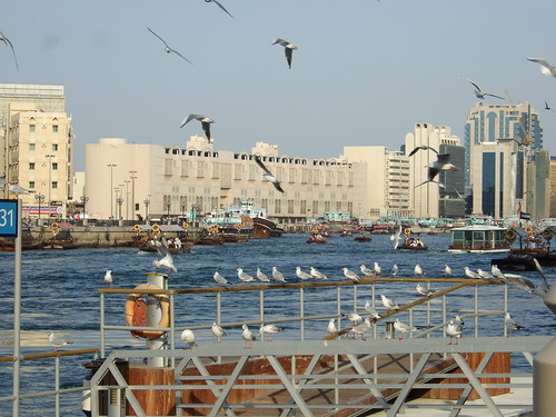 Dubai Creek Seagulls