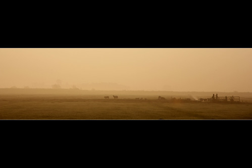 mist netherlands fog sunrise golden gate sheep nederland meadow polder gouden weiland hek schapen zonsopkomst