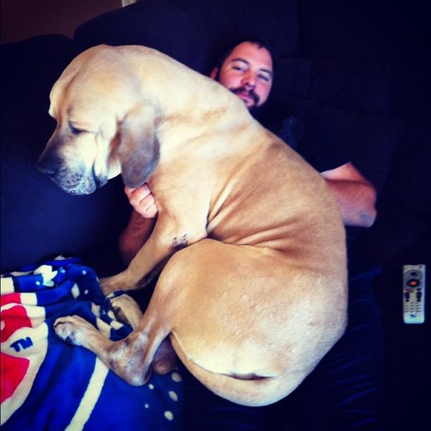 Big Lap Dog Species