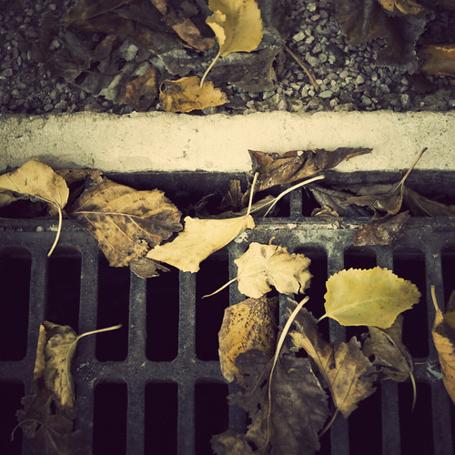 After the leaves... by Vanina Vila {Photography}