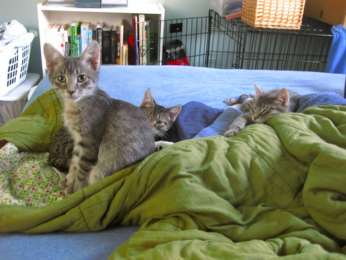 "kittens hangin"" out"