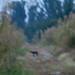Bobcat by KyleCare 