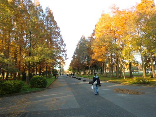 水元公園20111205-067