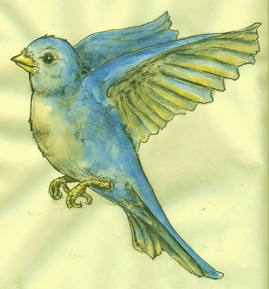 Flying Bluebird Pen And Ink On Paper Watercolor On 9x11
