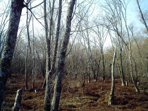 wetlands trees