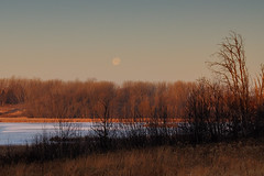Moon over Trees DSC_3835 by Mully410 * Images
