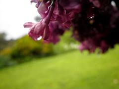 Victorian Garden_23