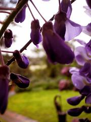 Victorian Garden_27