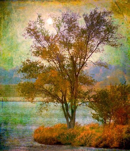 autumn trees sun fall texture water canon watersedge idream texturedlayers canoneosdigitalrebelxsi saariysqualitypictures bestcapturesaoi magicunicornverybest magicunicornmasterpiece trollieexcellence jackaloha2 photoshopcs5