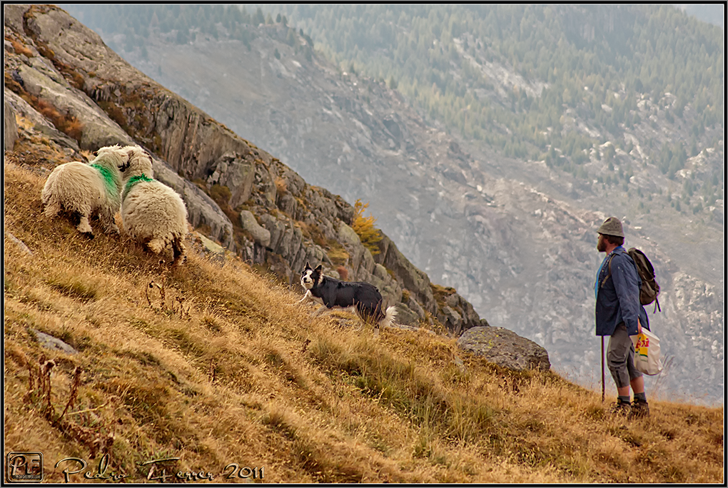 Suiza - Las Montañas - pastoreando