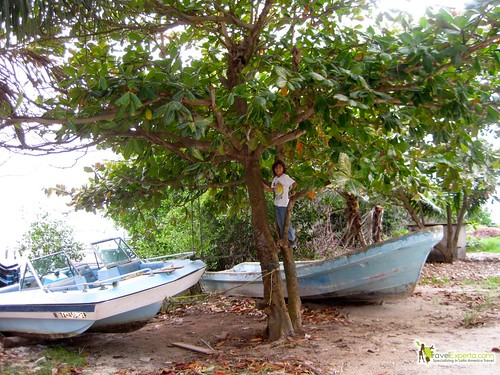 boats and climbing trees caye caulker belize