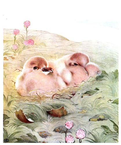 040-El pagalo-The book of baby birds 1912- Ilustrado por Edward Detmold- Hatchi Trust Digital library