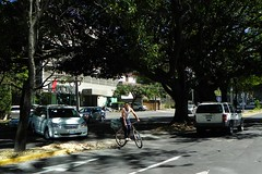 Tree-lined streets grace Guadalajara\'s Providencia district.