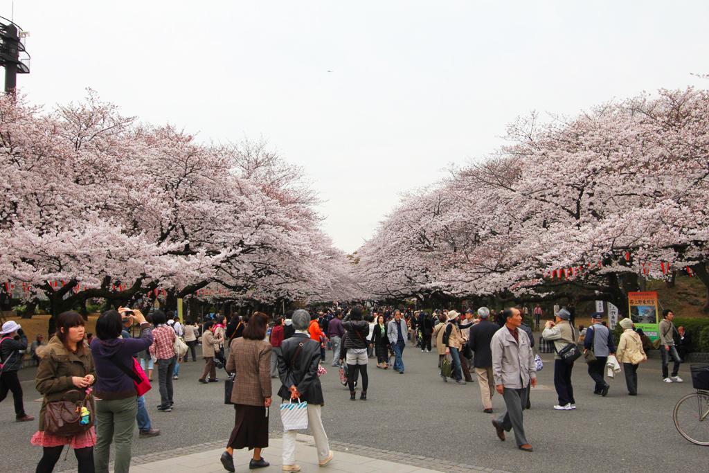 Sakura Photo 2011Ueno (1)