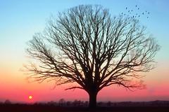 [フリー画像素材] 自然風景, 樹木, 朝焼け・夕焼け ID:201112281800