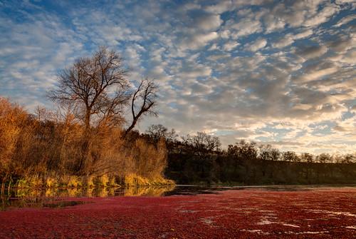 sunset clouds landscape lagoon marsh oaktrees sacramentoriver fairymoss azollacaroliniana bargehole