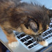Kitten ©kewl