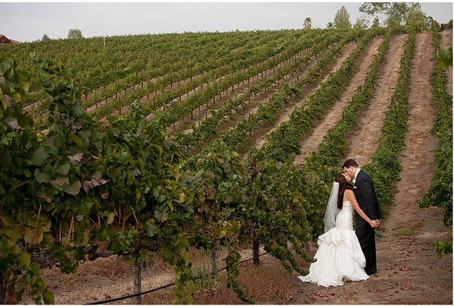 Temecula Vineyards In June Flickr Photo Sharing