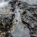 Small photo of Intertidal zone