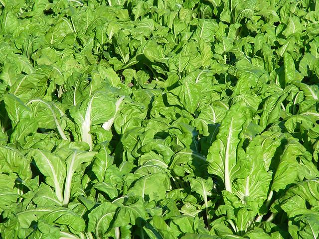 5 cultivos faciles para empezar un huerto en casa for 5 cultivos faciles para empezar un huerto en casa