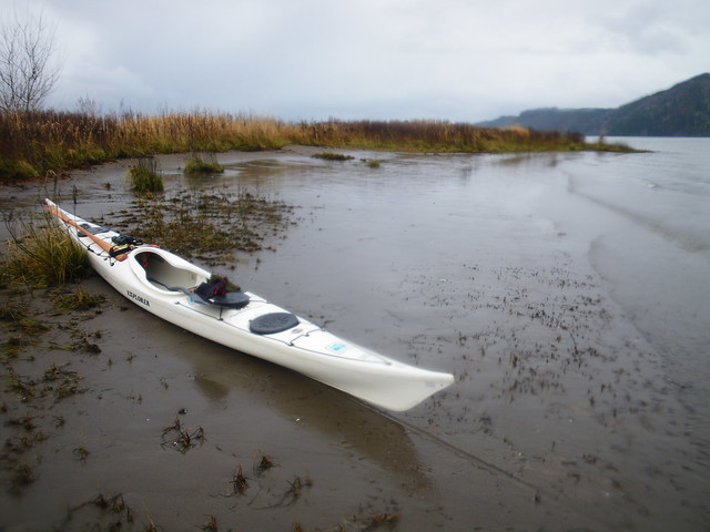Christmas bird count by kayak