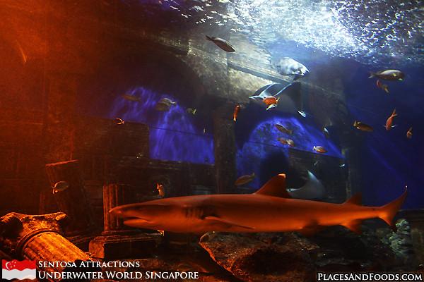 sentosa-underwater-world-8