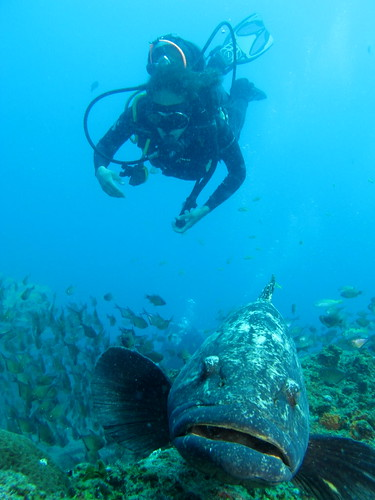 Melissa and the large potato bass, Ponta do Ouro, Mozambique