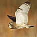 Owls On The Brain Again by Dan Belton ( No Badger Cull )