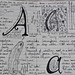 A is for - Aplacophora by eclectic echoes