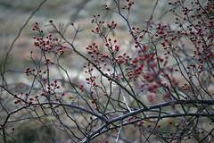 winter flowers 055