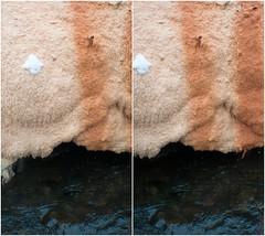 Geyser Island Sprouter tufa detail (2)