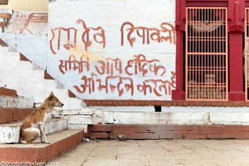 Street dog, Varanasi
