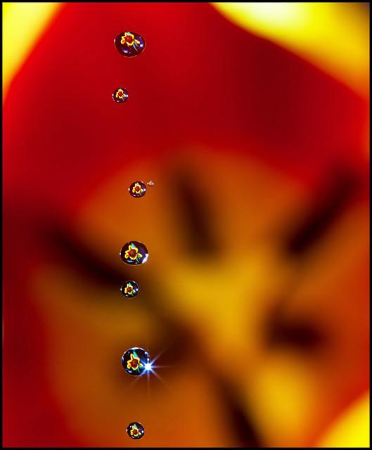 IMAGE: http://farm8.staticflickr.com/7019/6712059859_8c772789e6_z.jpg