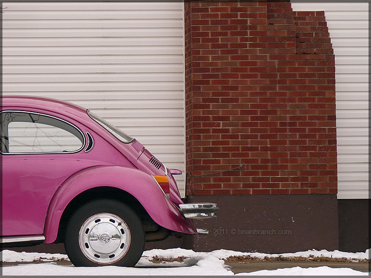 P1220642_pink_bug