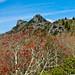 The Grandfather Mountain, NC