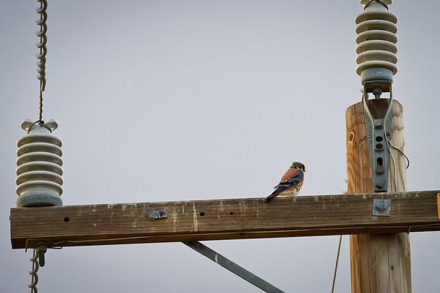 birdofprey2