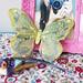borboleta e passarinho
