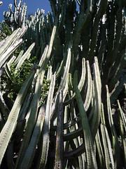 Bosque de cactus