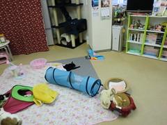 20120123浅草ねこ園-098