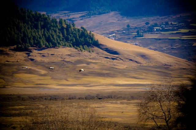 Phobjikha Valley - Wangdue Phodrang, Bhutan