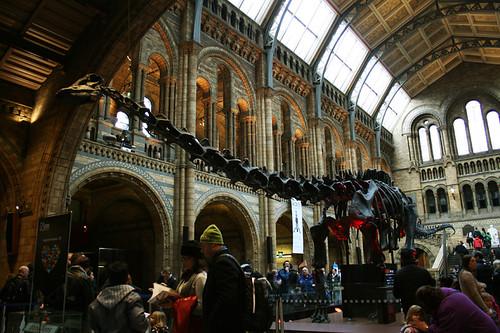 natural1London - Natural History Museum 4