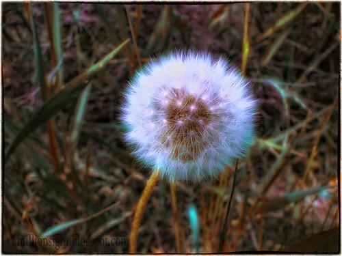 Snow-Flower